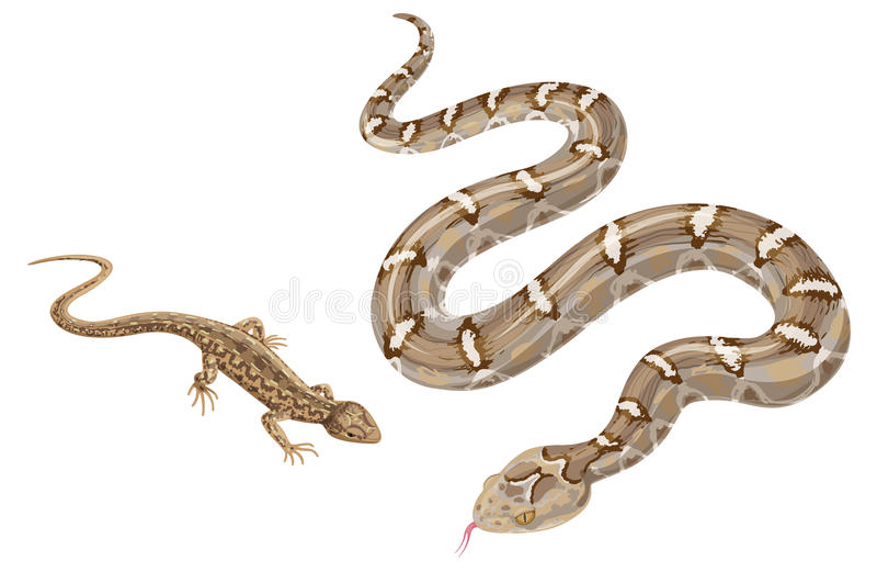 Bild av ormen och ödlan på vit royaltyfri illustrationer