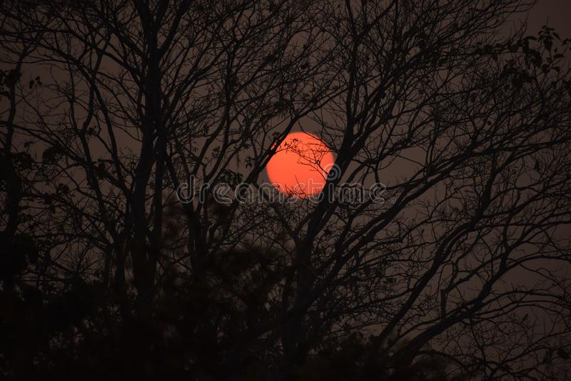 Bild av solen på aftonen arkivbild