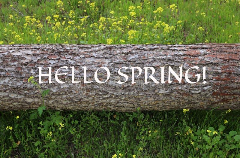 Bild av trädstammen med text: HELLO FJÄDRAR i skogen royaltyfria foton