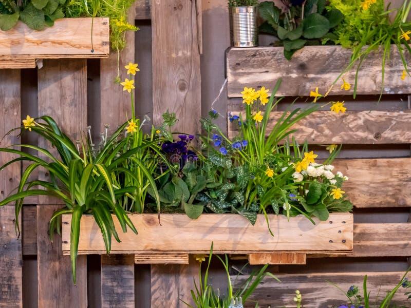 Bild av träväggen med träaskar som är fulla av härliga färgrika blommor garnering arkivbild