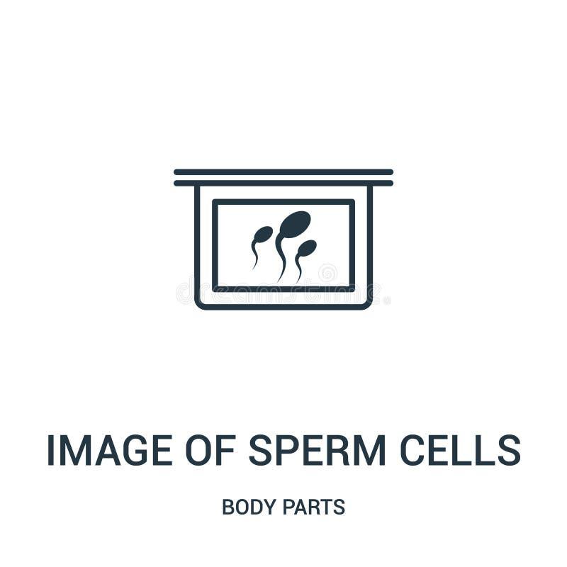 bild av vektorn för symbol för spermaceller från kroppsdelsamling Tunn linje bild av illustrationen för vektor för symbol för öve stock illustrationer