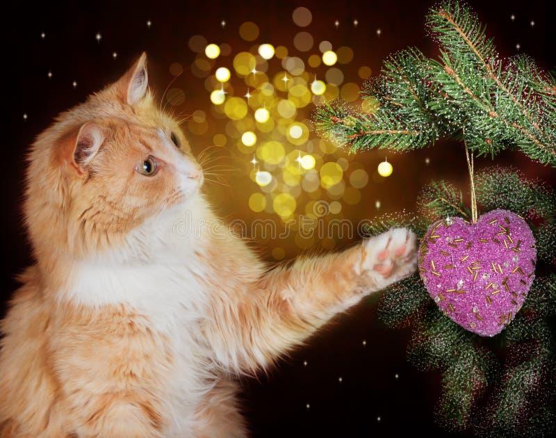 Bild der roten Katze spielend mit dem Weihnachtsdekorationshängen lizenzfreies stockfoto