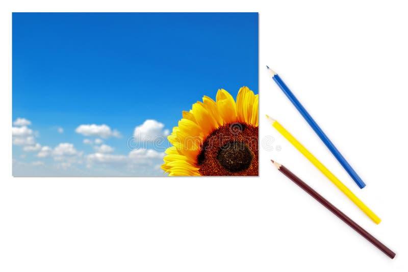 Bild der Sonnenblume und des blauen Himmels auf Blatt Papier stockfotos
