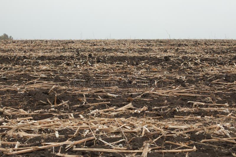 Bild des Endes des Sommers, getrockneter Mais nachdem dem Ernten lizenzfreie stockbilder