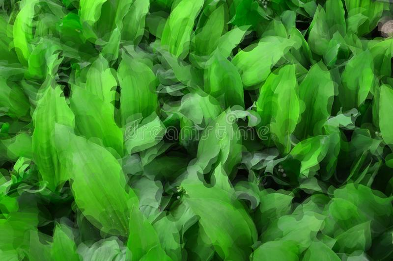 Bild des grünen Hintergrundes von den Blättern von Maiglöckchen Lat Convallaria majalis lizenzfreie stockfotos