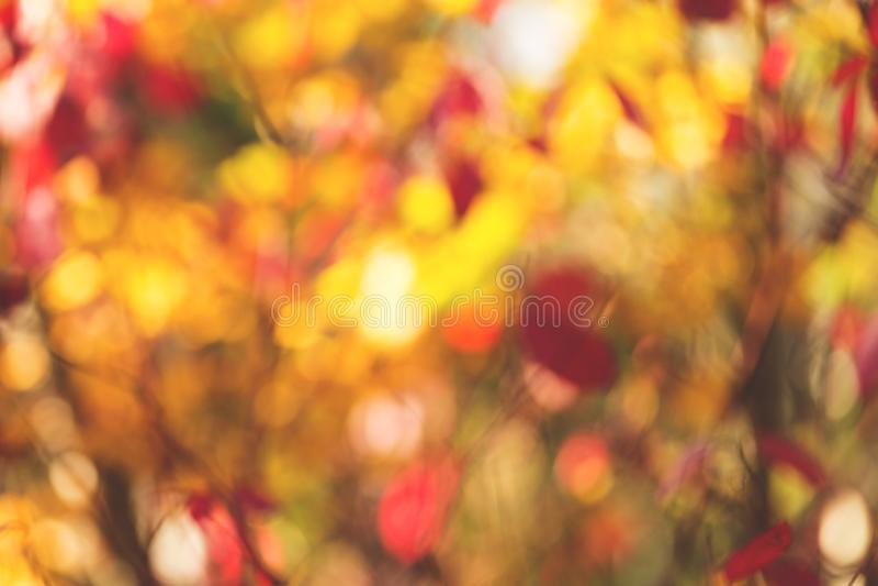 Bild des Herbstgoldzusammenfassungshintergrundes, unscharfes bokeh Orange, braunes und gelbes Weiche fokussierte Blätter lizenzfreie stockfotos