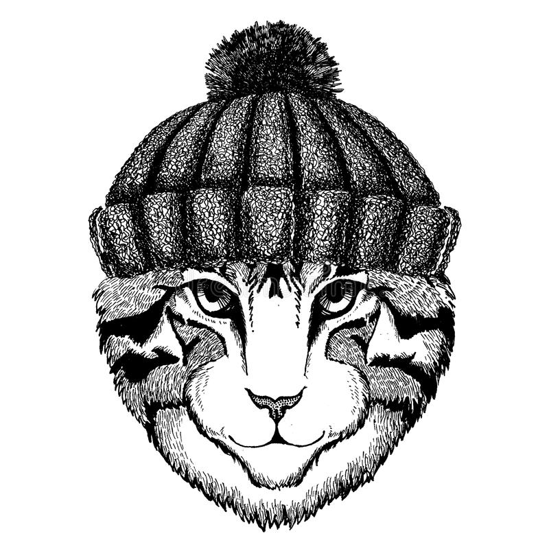 Bild des kühlen Tieres der Hauskatze, das gestrickten Winterhut trägt Warme Kopfschmuck Beanie Weihnachtskappe für Tätowierung, T lizenzfreie abbildung