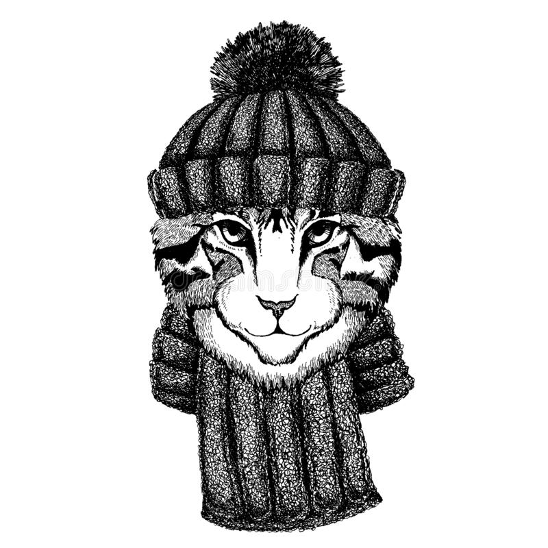 Bild des kühlen Tieres der Hauskatze, das gestrickten Winterhut trägt Warme Kopfschmuck Beanie Weihnachtskappe für Tätowierung, T stock abbildung