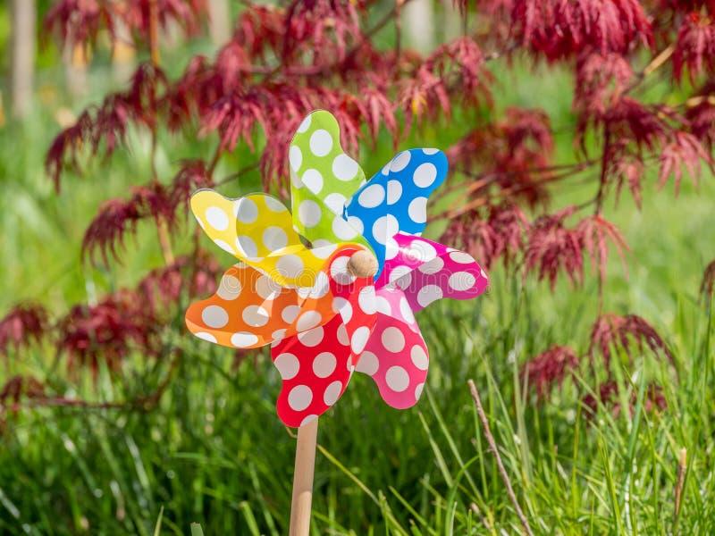 Bild des kindischen bunten Feuerrads gegen grünen Garten lizenzfreie stockfotografie