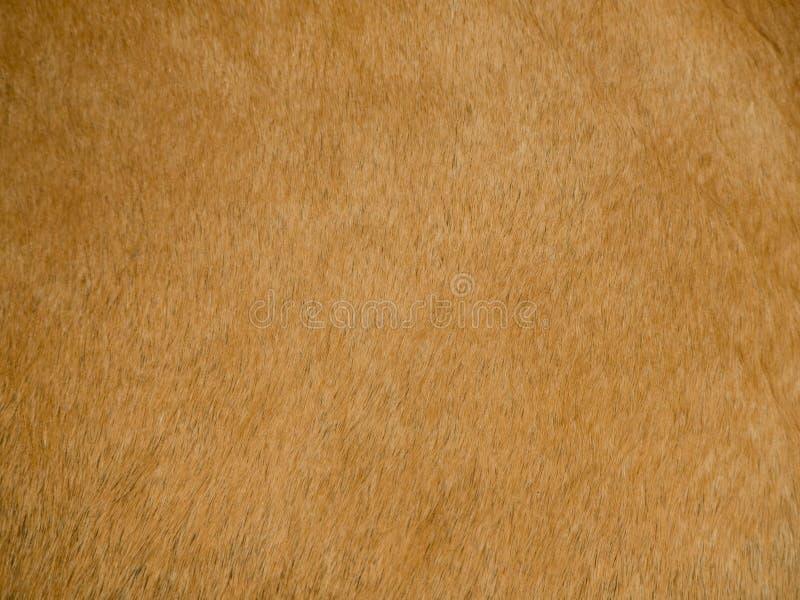 Bild des natürlichen Tierleders stockbild