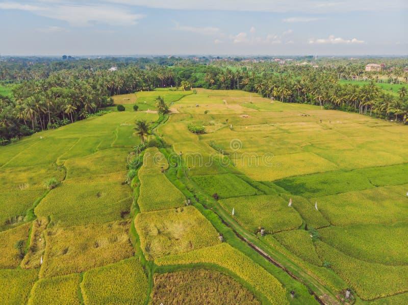 Bild des schönen terassenförmig angelegten Reisfeldes in der Wasserjahreszeit und Bewässerung vom Brummen, Draufsicht des Reispad stockfotos
