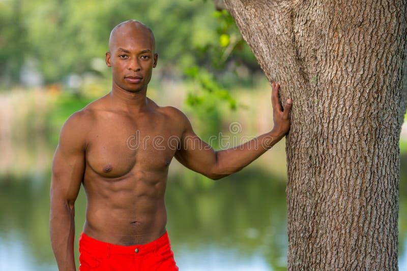 Bild eines attraktiven Eignungsmodells mit der Hand auf Baum im Park stockfotografie