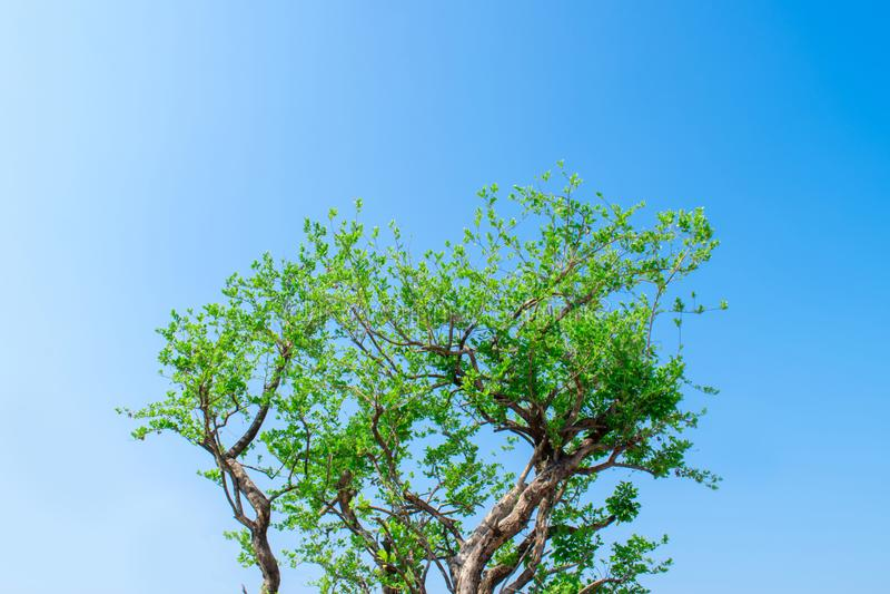 Bild eines Baumasts mit einem Himmel als dem Hintergrund lizenzfreie stockbilder