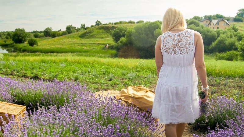 Bild för bakre sikt av den unga kvinnan i den vita klänningen som går på det blommande blommafältet royaltyfri fotografi