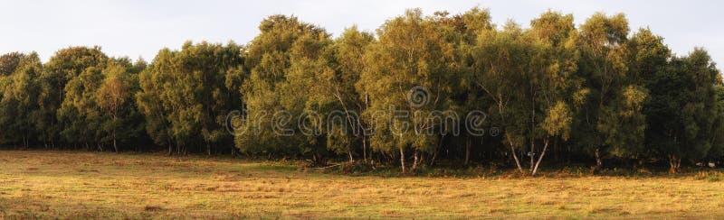 Bild för landskap för härlig sommarsolnedgång panorama- av Ashdown för arkivfoto