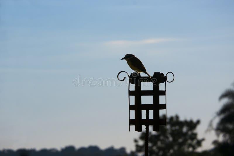 Bild för stillsam plats för fågelnatur som utomhus- står inga horisontalpersoner arkivbild