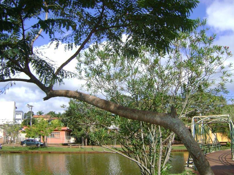 Bild malte von Natur aus, der Baum, der über Teich sich lehnt lizenzfreie stockfotografie