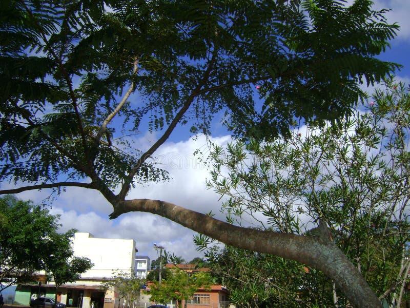 Bild malte von Natur aus, der Baum, der ?ber Teich sich lehnt stockbilder