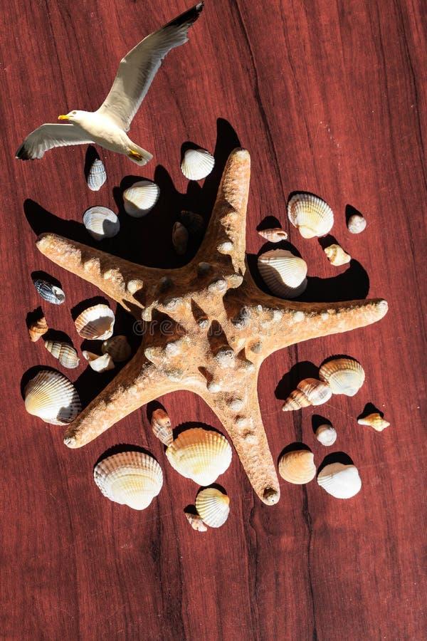 Bild med en stor havsstjärna som omges av många skal Sjöstjärna på träbakgrund Beståndsdelar av havet och havet Seagull i flyg arkivfoto
