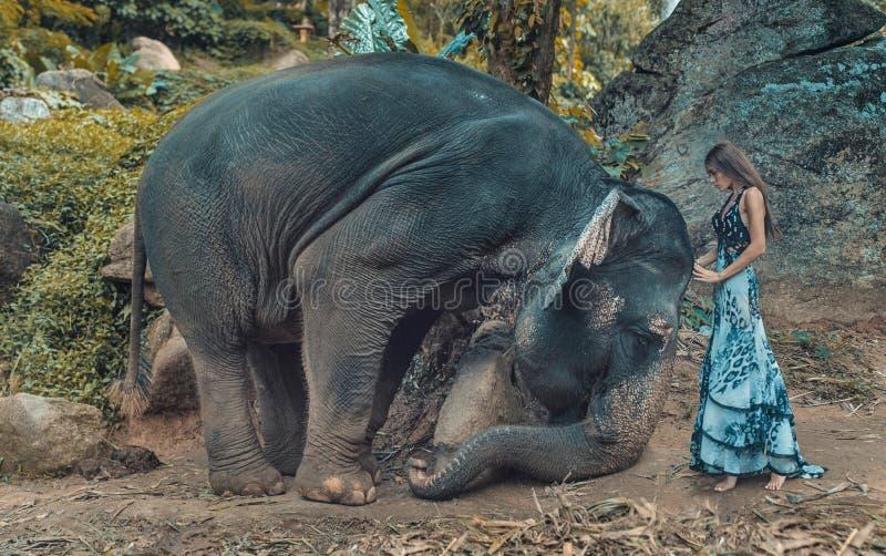 Bild som framlägger kvinnan som tämjer en elefant arkivfoto