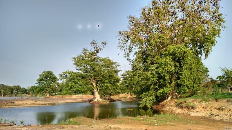 Bild von Bäumen u. von Wasser, seine Blicke schön lizenzfreie stockfotografie