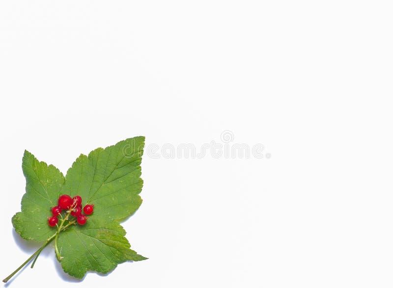 Bild von Beeren und von Blättern auf einem weißen Hintergrund stockfotos