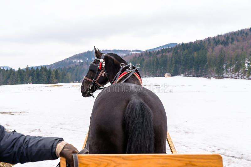 Bild von einem Pferdewagen, Pferdeansicht von hinten, im Hintergrund, im Schnee und in den Bergen stockfotografie