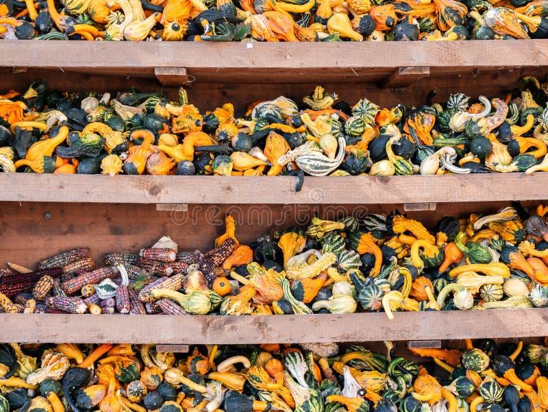Bild von kleinen pumkins und von Mais in einem Regal lizenzfreie stockfotografie