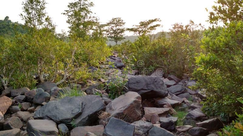 Bild von schönen Felsen und von Betriebsnatur, seine Blicke schön lizenzfreie stockfotos