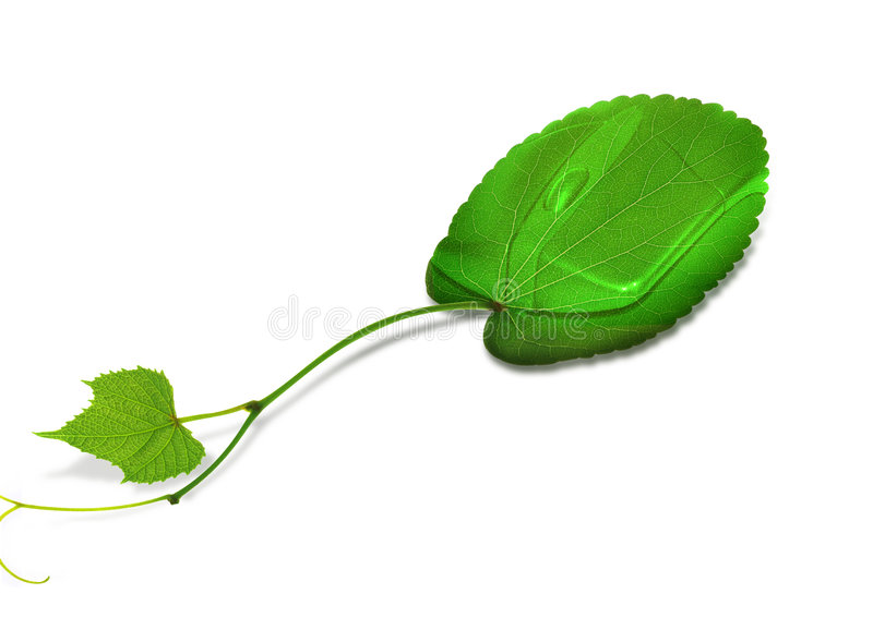 bilda leafmusen stock illustrationer
