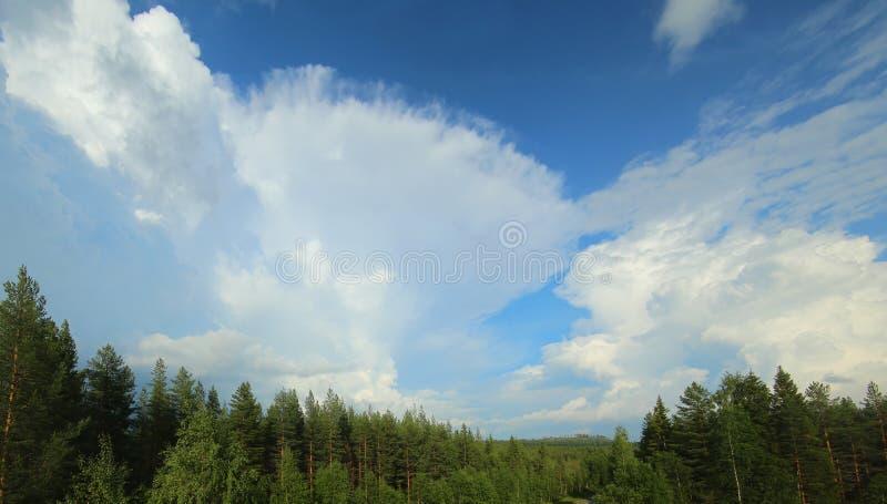 Bildande av ett cumulonimbusmoln över boreal skog royaltyfri fotografi