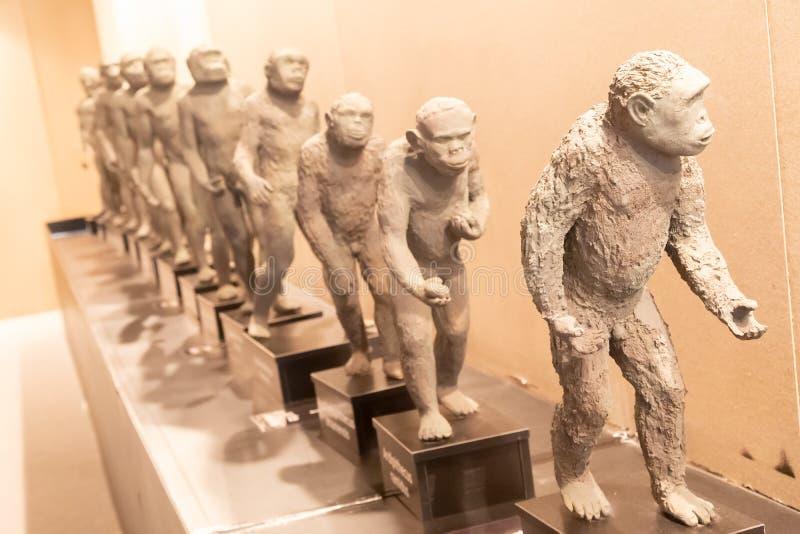Bildande framställning av mänsklig evolution royaltyfri foto