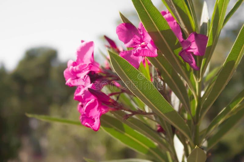 Bilden av blommor i parkerar på rätsidan arkivfoton