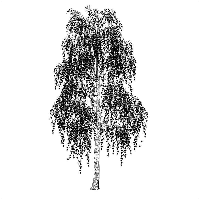 Bilden av en björk med sidor, skuggor av grå färger stock illustrationer