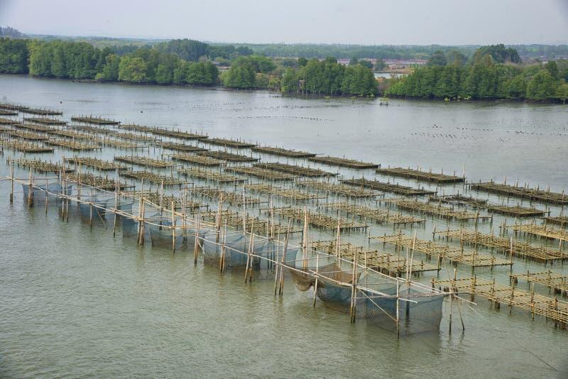 Bilden av en naturlig bakgrund för ostronlantgård royaltyfria foton