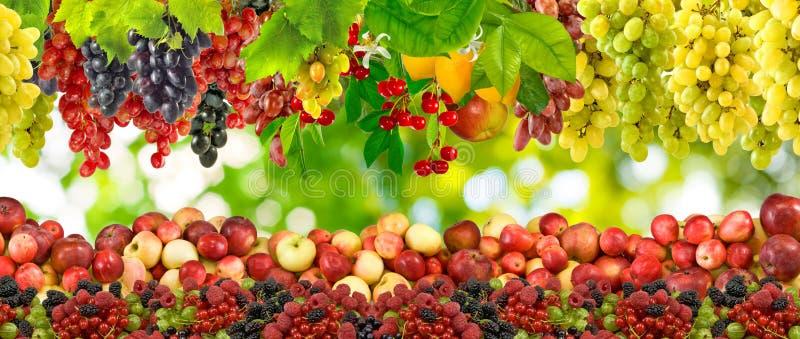 Bilden av många bär frukt closeupen fotografering för bildbyråer
