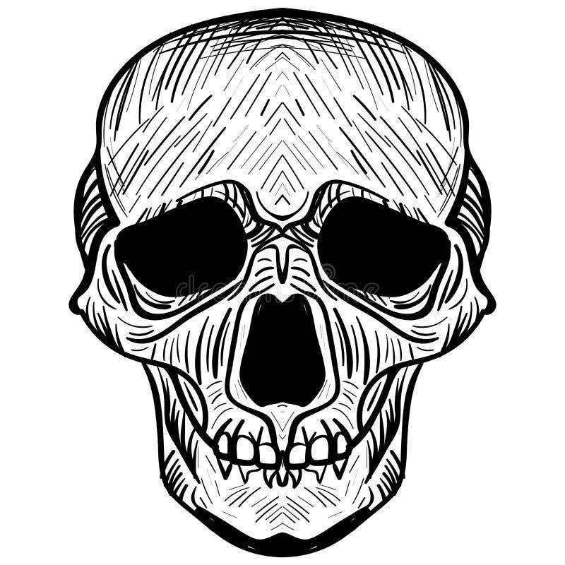 Bilden av skallen också vektor för coreldrawillustration vektor illustrationer