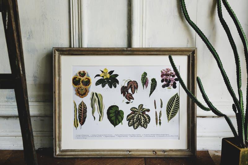 Bilden går samlingen för handteckningsblommor i en ram royaltyfria bilder