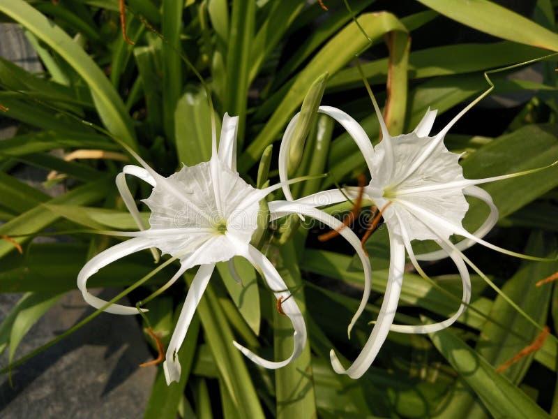 Bilder av blommor royaltyfri fotografi