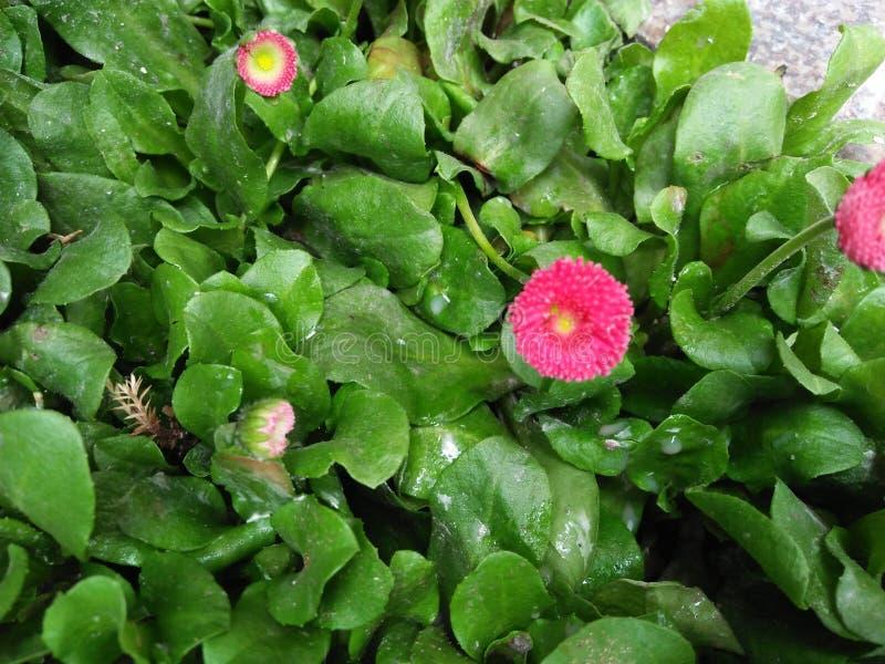 Bilder av blommor royaltyfri bild