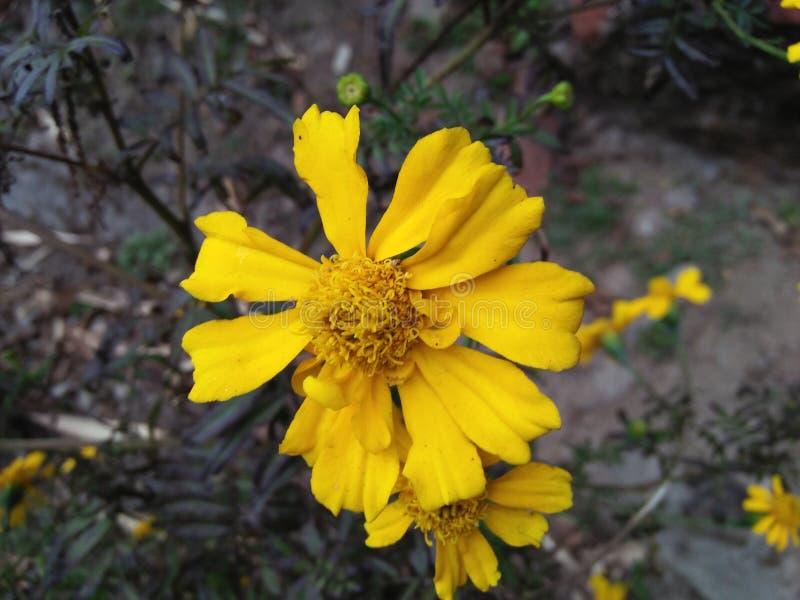Bilder av blommor arkivbilder