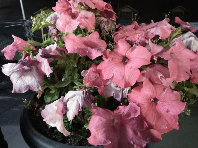 Bilder av blommor royaltyfria bilder
