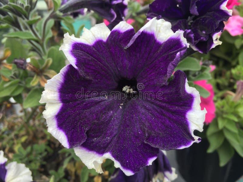 Bilder av blommor arkivbild