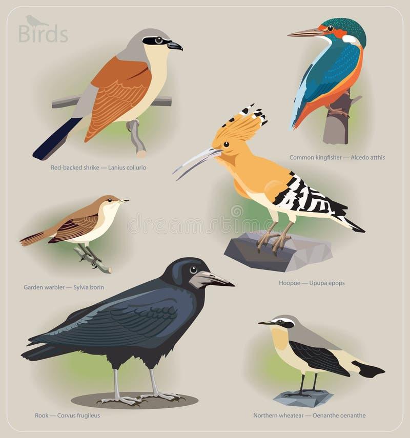 Bildmenge Vögel lizenzfreie abbildung