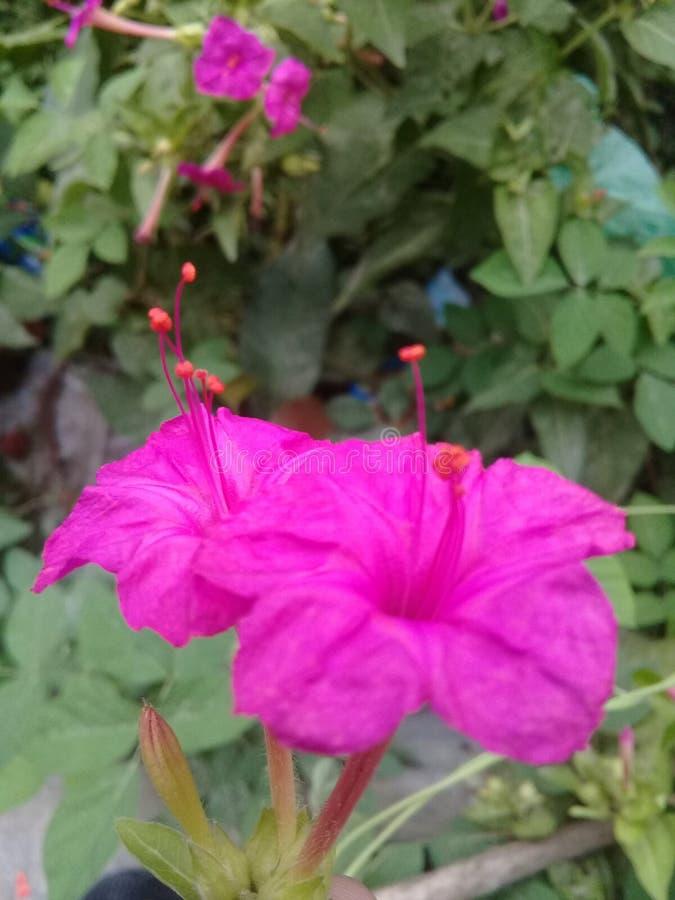 BildMorgon-afton blomma royaltyfri foto