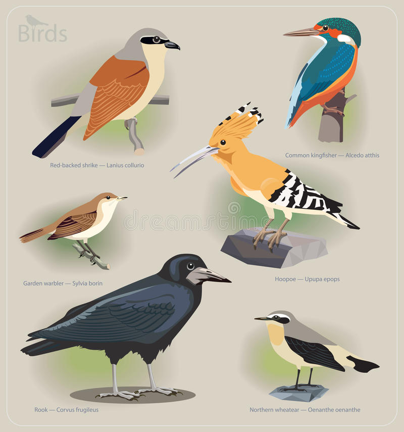 Bilduppsättning av fåglar royaltyfri illustrationer