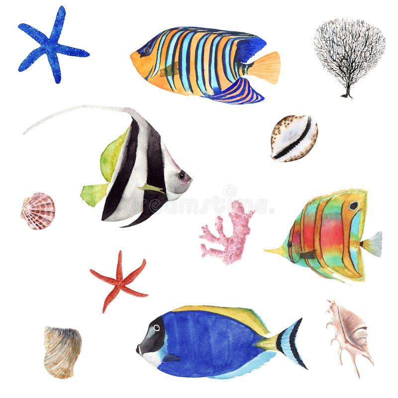 Bilduppsättning för illustration av ritad vattenfärgad tropisk fisk Korall och havskal isolerade på vit bakgrund royaltyfri illustrationer