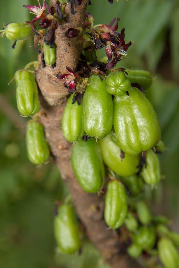 Bilimbi stock afbeeldingen