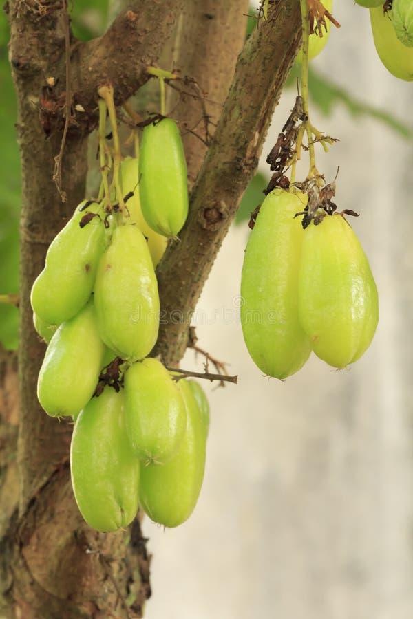 Bilimbi Frucht stockbild