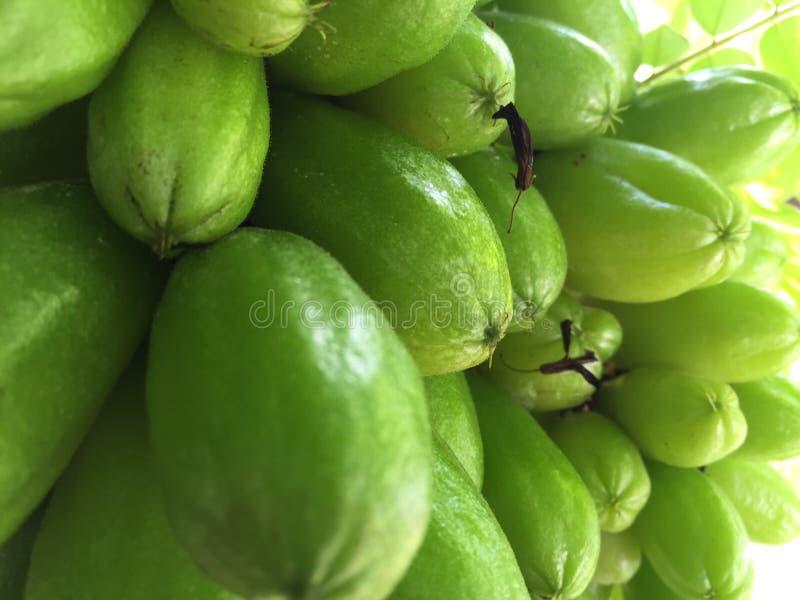 Bilimbi van Averrhoa van de komkommerboom als bilimbi of boomzuringsclose-up die wordt bekend stock foto